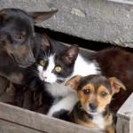 cani-e-gatti-abbandonati